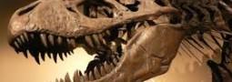 El viernes 10 de Junio la APV dictó una charla sobre paleontologia de Peninsula Valdes