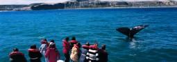 Más de 19 mil personas visitaron la Península Valdés durante la primera quincena de noviembre