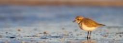 Penísula Valdés reconocida por ser reserva para aves playeras migratorias