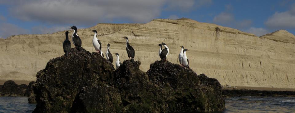 Península Valdés posee importantes hábitats para la conservación de varias especies de aves