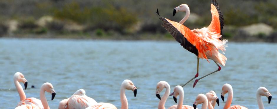 En nuestras costas se pueden observar y disfrutar de gran variedad de aves